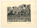 View Thebes-West, The Colossi of Memnon digital asset: Rotogravure, verso, Egypt: Thebes-West, Tamarisk-trees, 1927