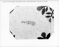 View 1850 - 1854 Mary C. Pickering's Applique Quilt digital asset number 11