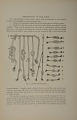 View Book, The Ancient Quipu or Peruvian Knot Record digital asset: Book, The Ancient Quipu or Peruvian Knot Record, Figure 1