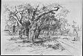View An Apple Orchard -- Easthampton, L. I. digital asset: Old orchard, Easthampton
