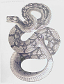"""View Engraving of snake species """"Crotalus molossus"""" digital asset number 1"""