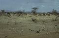 View Herbert M. Cole photographs digital asset: Near Barseloi : northern Kenya
