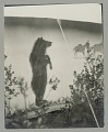 View Painted Tent Decoration: Standing Bear with Two Horses? JUL 1924 digital asset number 1