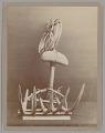 View Drag, Wood:Stone:Fiber (for Pearls) 1905 digital asset number 1