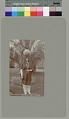 View Woman with water jar on head near palm trees Copyright 12 FEB 1897 digital asset number 0