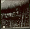 View Two Choco Boys in Costume and Inside Platform House with Thatch Roof and Notched Pole Ladder; Clothes on Railing 1923 digital asset number 1