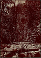 View View of Tropical Forest 1870 digital asset number 0