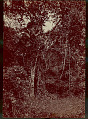 View View of Tropical Forest 1870 digital asset number 1