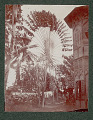 View Puerto Rican Palm Tree Beside Two-Story Brick and Split Timber House 1901 digital asset number 1