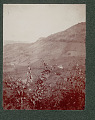 View Cultivated Puerto Rican Fields on Mountain Side and Houses at Base Of Mountain Near Military Dirt Road 1901 digital asset number 1