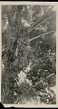 View Dead Bamboo Poles from Which Heads Are Hung n.d digital asset number 1