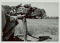 View Basket with Bundles on Fence Post 1965 digital asset number 0