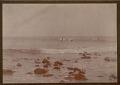 View Hawaiians Surf Boarding Near Rocky Shore MAY 1890 digital asset number 1