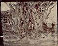 View Non-Native Man at Base of Large Tree Beside Masonry Ruins n.d digital asset number 1