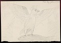 View Thunderbird Carrying a Whale in his Talons Drawing digital asset: Thunderbird Carrying a Whale in his Talons Drawing