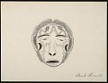 View Mask Worn in Klukwalle Dance Drawing digital asset: Mask Worn in Klukwalle Dance Drawing