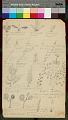View MS 3462 Cherokee drawings of plants digital asset: Cherokee drawings of plants