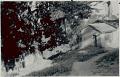 View [Fetish house and gameleira trees by Gantois temple], 1938 September digital asset number 0