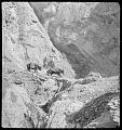 View Richard Kenneth Saker Film Collection, 1942-1943 digital asset number 1