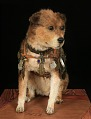 View Owney the dog digital asset number 1