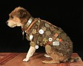 View Owney the dog digital asset number 3