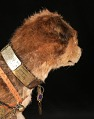 View Owney the dog digital asset number 5