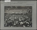 View [Elizabeth Park]: the rose garden, with 'Oakmont' roses in the foreground. digital asset: [Elizabeth Park] [photographic print]: the rose garden, with 'Oakmont' roses in the foreground.
