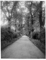 View [Miscellaneous Sites in London, England]: looking down a walkway toward a garden house, probably in Regent's Park. digital asset: [Miscellaneous Sites in London, England] [glass negatives]: looking down a walkway toward a garden house, probably in Regent's Park.