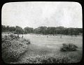 View Unidentified Garden: possibly the Playstead section of Franklin Park (MA047) with the Overlook Terrace in the background. digital asset: Unidentified Garden in Boston, Massachusetts [glass negative]: possibly the Playstead section of Franklin Park (MA047); the Overlook Terrace may be in the background.