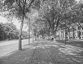 View [Beacon Street & Commonwealth Avenue]: Beacon Street looking east between Carlton Street and St. Mary's Street. digital asset: [Beacon Street & Commonwealth Avenue] [glass negative]: Beacon Street looking east between Carlton Street and St. Mary's Street.