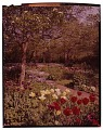 View [Kinney Garden]: tulips, flowering trees, and other spring blossoms. digital asset: [Kinney Garden] [slide]: tulips, flowering trees, and other spring blossoms.