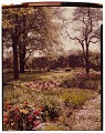 View [Kinney Garden]: garden in spring, looking toward outdoor seating area and tall hedge. digital asset: [Kinney Garden] [slide]: garden in spring, looking toward outdoor seating area and tall hedge.