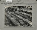 View [Breeze Hill]: stone stairs with ground cover plants growing on each step. digital asset: [Breeze Hill] [photographic print]: stone stairs with ground cover plants growing on each step.