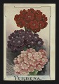 View <I>Trade card, Ferry & Co.'s verbena</I> digital asset number 0
