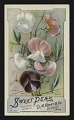 View <I>Trade card, D. M. Ferry and Co., sweet peas</I> digital asset number 0