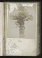 View <I>Album, floral frames</I> digital asset number 4