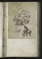 View <I>Album, floral frames</I> digital asset number 6
