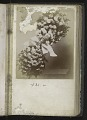View <I>Album, floral frames</I> digital asset number 7