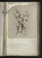 View <I>Album, floral frames</I> digital asset number 9