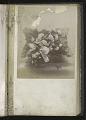 View <I>Album, floral frames</I> digital asset number 33