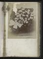 View <I>Album, floral frames</I> digital asset number 36
