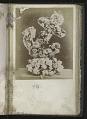 View <I>Album, floral frames</I> digital asset number 11