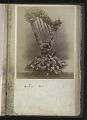 View <I>Album, floral frames</I> digital asset number 14