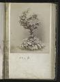 View <I>Album, floral frames</I> digital asset number 15