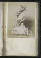 View <I>Album, floral frames</I> digital asset number 22