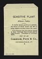 View <I>Seed packet, Comstock, Ferre, & Co., sensitive plant</I> digital asset number 1