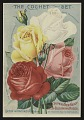 View <I>Nursery Catalog Page, Dingee & Conrad Co., Advertisement for New Ever-Blooming Roses</I> digital asset number 0