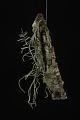 View Microcoelia aphylla digital asset: Photographed by: Creekside Digital