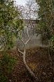 View Cephalanthus occidentalis digital asset: Photographed by: Hannele Lahti