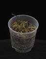 View Liparis viridiflora digital asset: Photographed by: Creekside Digital